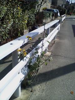 image/kitaoka-2005-12-08T11:51:01-4.jpg