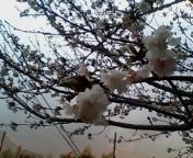 image/kitaoka-2006-03-22T06:25:42-1.jpg