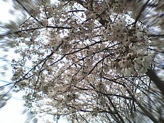 image/kitaoka-2006-04-06T23:54:10-1.jpg