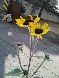 image/kitaoka-2005-12-08T11:51:00-2.jpg