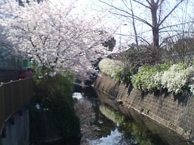 image/kitaoka-2006-04-07T23:09:45-3.jpg