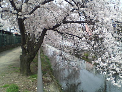 image/kitaoka-2006-04-09T10:32:04-2.jpg